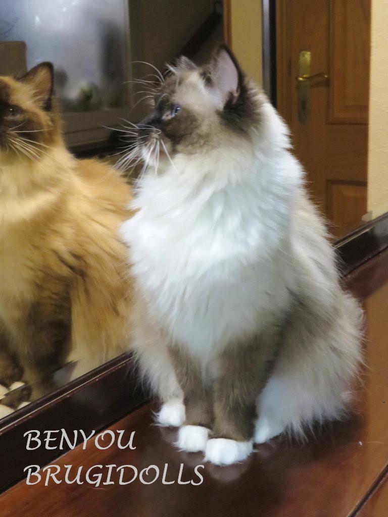 brugidolls-benyou2