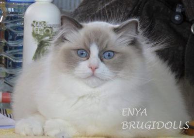 Brugidolls Enya