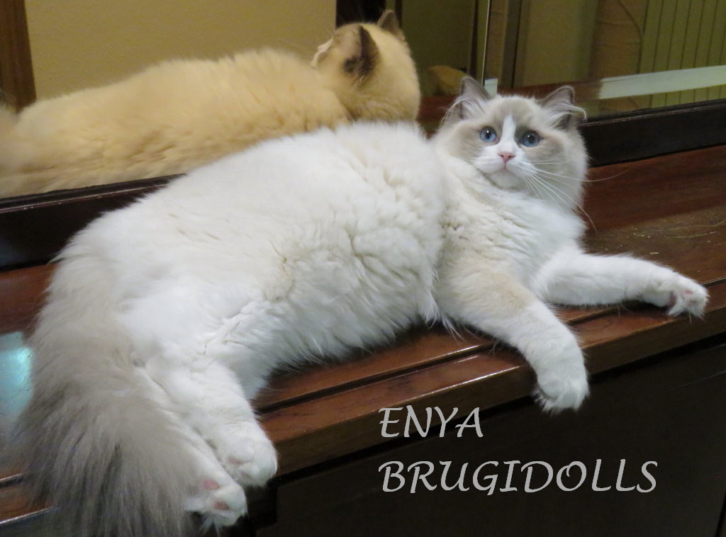 brugidolls-enya6