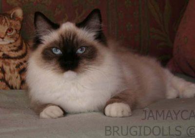 Brugidolls Jamayca