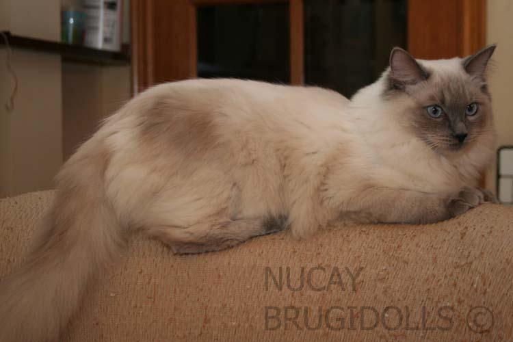 brugidolls-nucay1