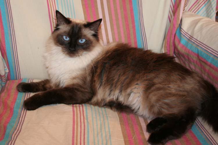 cehrelis-cat-walk-of-brugidolls1