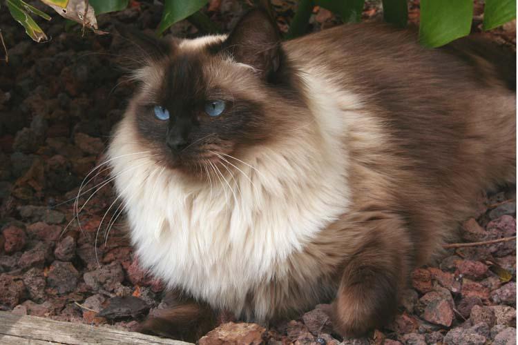 cehrelis-cat-walk-of-brugidolls4
