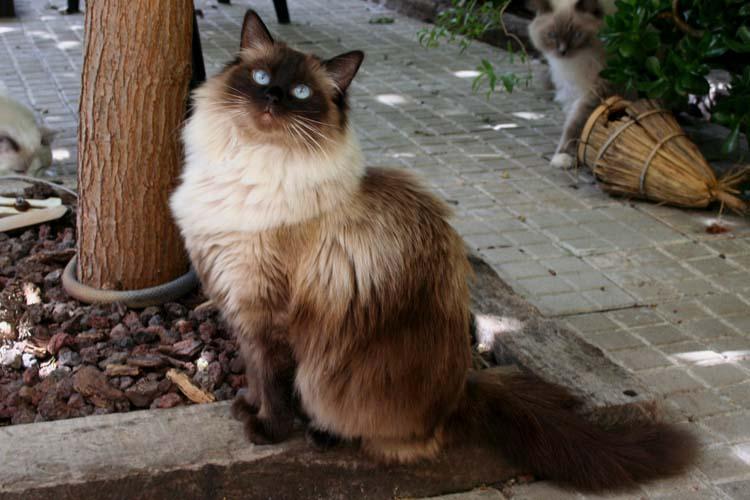 cehrelis-cat-walk-of-brugidolls5