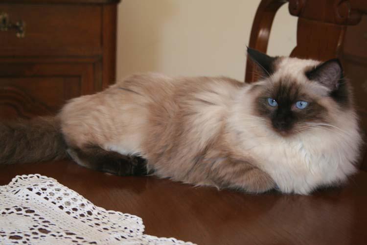 cehrelis-cat-walk-of-brugidolls6