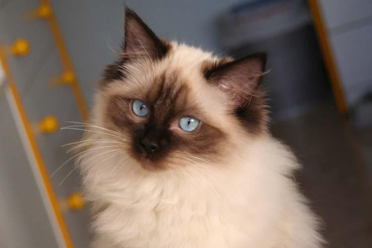 cehrelis-cat-walk-of-brugidolls7
