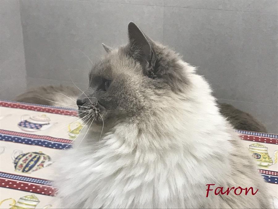 faron1