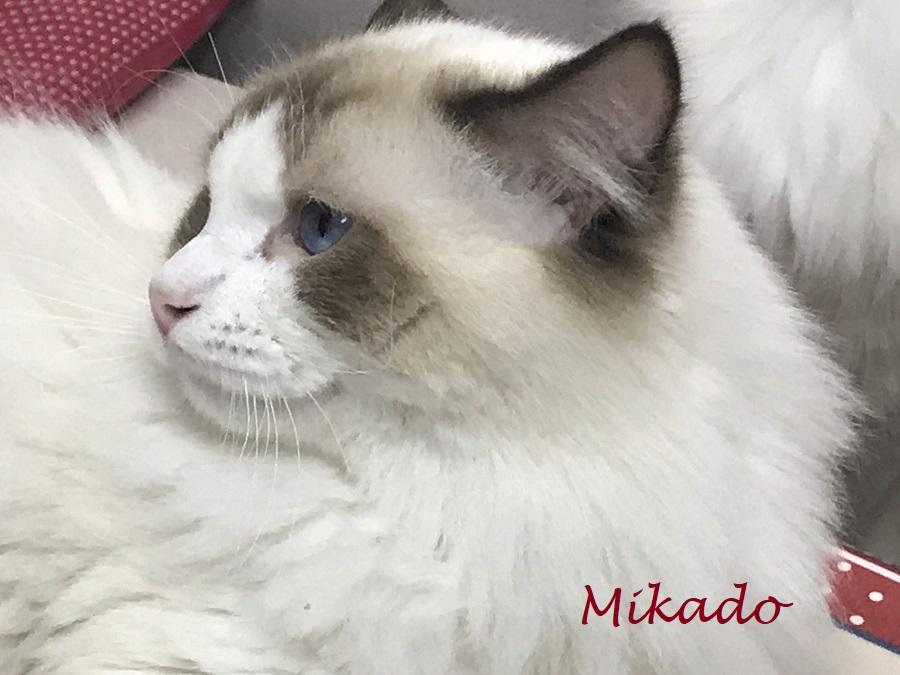 mikado3